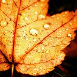 weather_november_